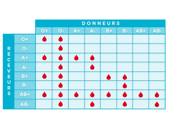 La transfusion passe par une compatibilité des groupes sanguins